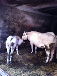 L'ultima stalla del Borgo a Bardineto